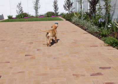 Back courtyard paving - Clay Paver